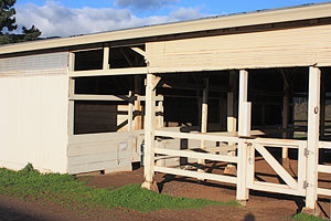 horse hotel stall